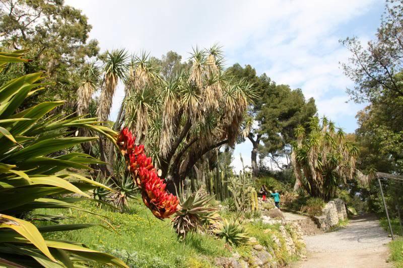 Jardin Botanique de Hanbury IMG_8995_zpsfc96711a