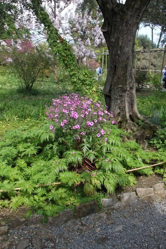 Jardin Botanique de Hanbury IMG_9007_zpse9c44770