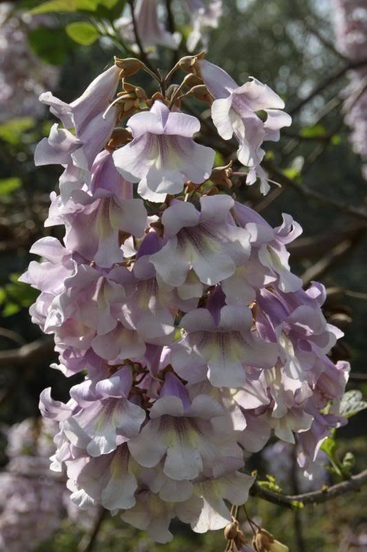 Jardin Botanique de Hanbury IMG_9010_zps3d939c0e