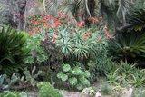 Jardin Botanique de Hanbury Th_IMG_8794_zpsba848367