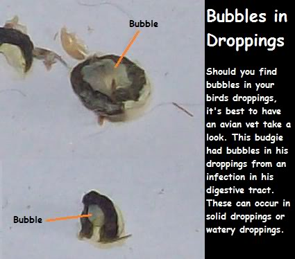 Abnormal Dropping Guide Bubbledroppings2