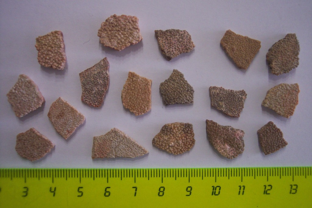 Photos of fossils to change. 3