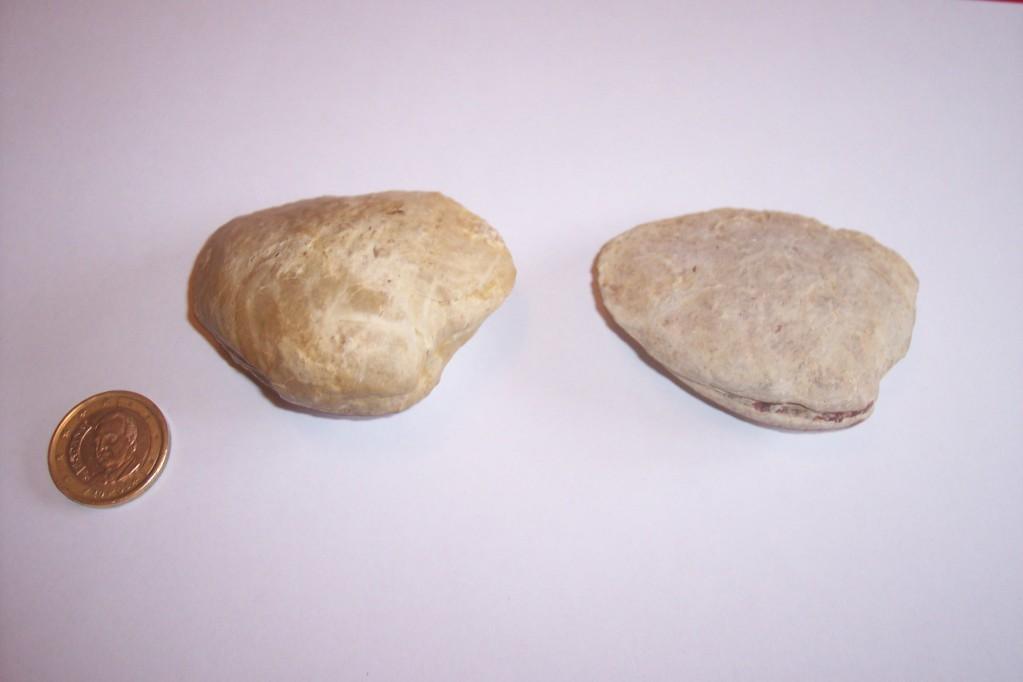 Photos of fossils to change. ThraciaDepressa-Jursico-Segovia