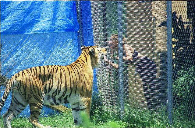 Comparação de  tamanho entre  animais  e   Seres humanos - Página 2 C4f2441e4134970a18024c9a95cad1c8a7865d30