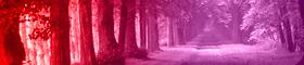 Bosque Sellado