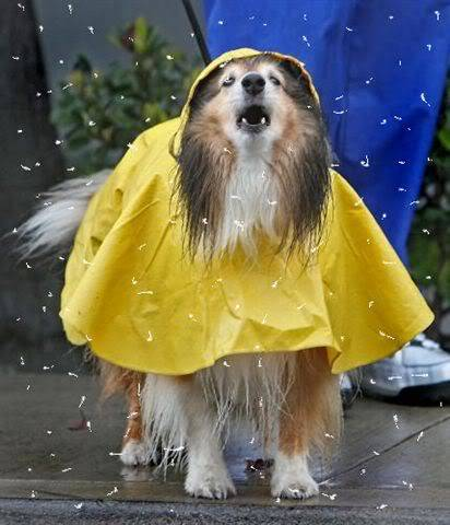 An Easy Animated Rain Tag 2-3