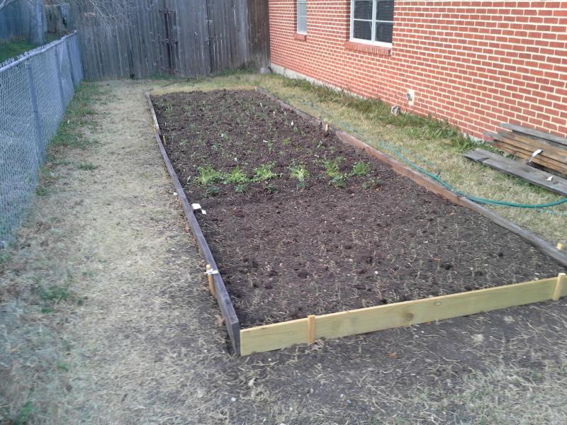 Our Salsa Garden  Garden2_zpsb8d9fd3a