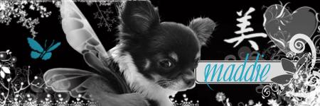 www.chihuahuaengler.com Maddieban