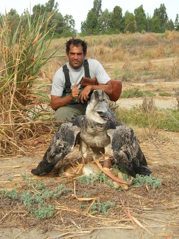 Comparação do tamanho de águias  com relação ao homem. La_bruja_con_conejo