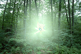 Pokémon in our world: pictures! Th_Celebi