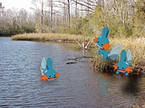 Pokémon in our world: pictures! Th_Mudkip