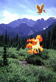 Pokémon in our world: pictures! Th_Rapidash