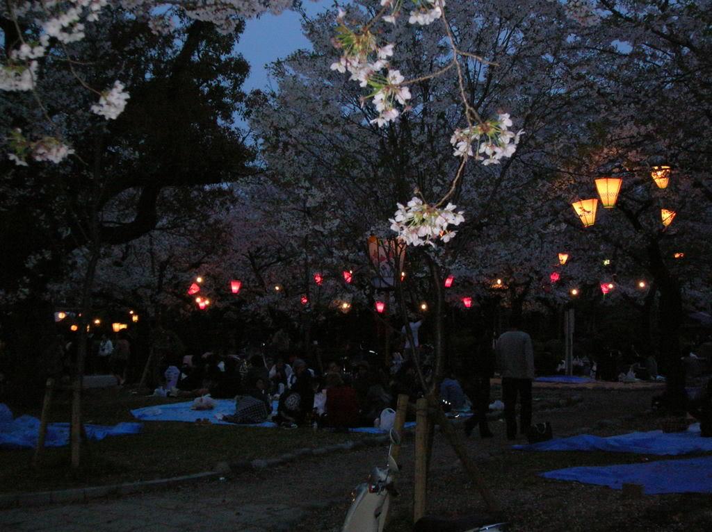 Festivalul florilor de cires -Sakura hanami DSCN0359