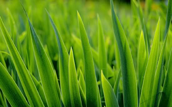 Los 6 Pasos para Resembrar un Cesped Lawn01
