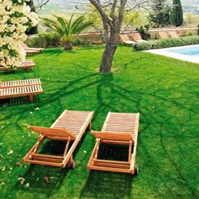 Los 6 Pasos para Resembrar un Cesped Lawn03