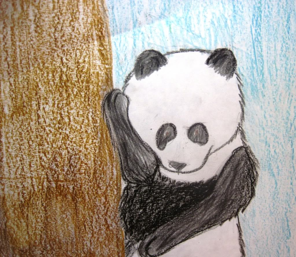 panda IMG_11912