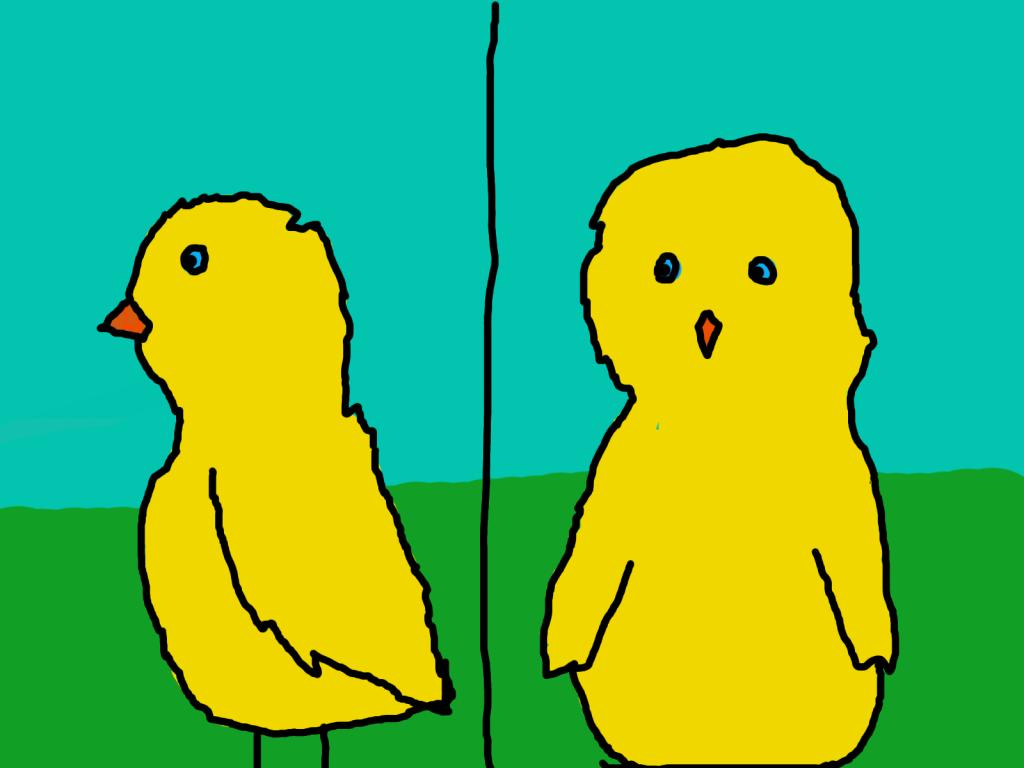 chickens Pollitos