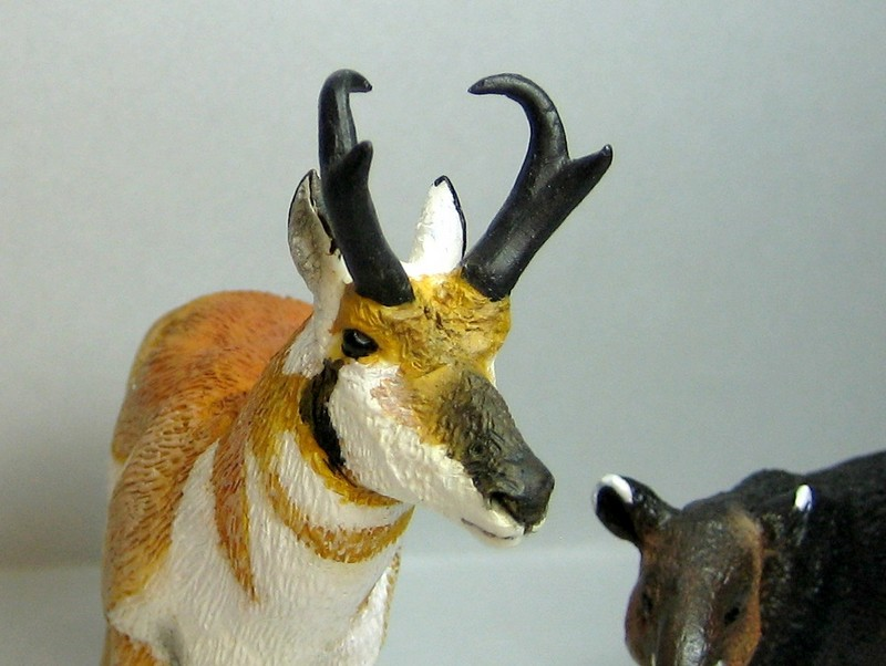 Pronghorn and mountain tapir made by Anna :-) Proghornface2