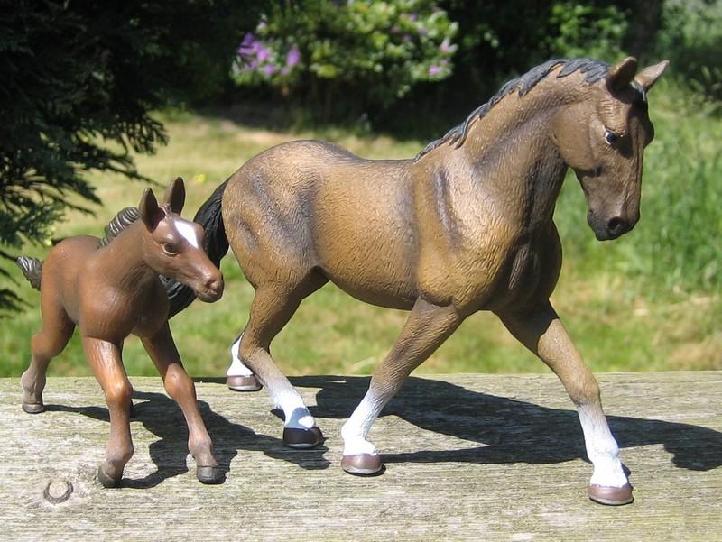 Mojo horses from 2011 Mojohannoverfoal