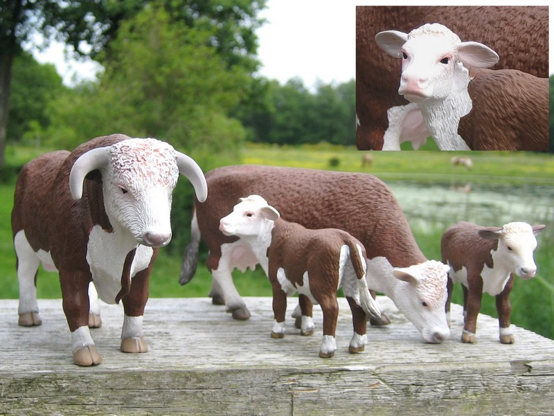 A little mojo shopping freekout : Pigs, sheep, cows, a moose and a kangoo :-D Mojohereford