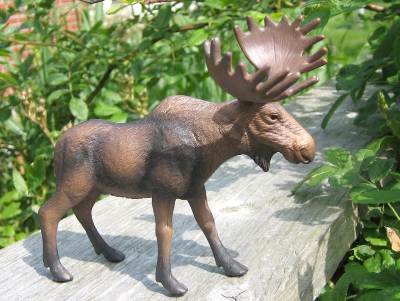 A little mojo shopping freekout : Pigs, sheep, cows, a moose and a kangoo :-D Mojomoose