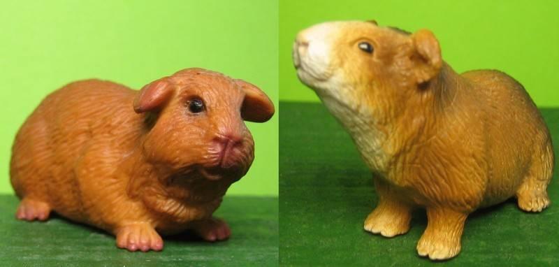 Guniea pig figures: I'm so much in love! Marsvinsch_zpsda39668e