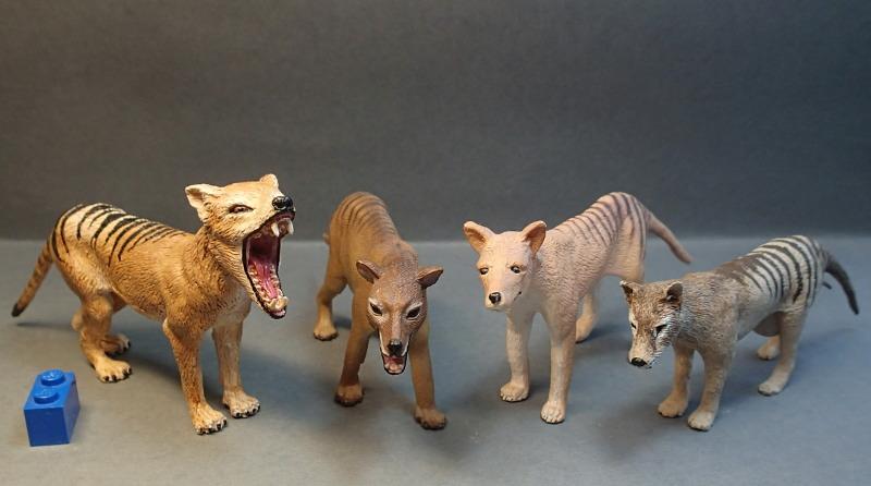 The thylacine from Southlands Replicas, - item no 00000 :-D Pungulve_zpsijjbhs5r