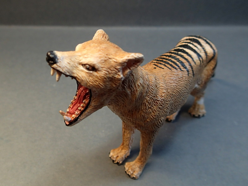 The thylacine from Southlands Replicas, - item no 00000 :-D Southland00000Face_zps9prp3gib