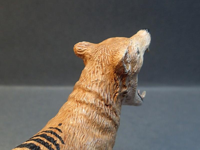 The thylacine from Southlands Replicas, - item no 00000 :-D Southland00000Head_zpsaujzgl2b