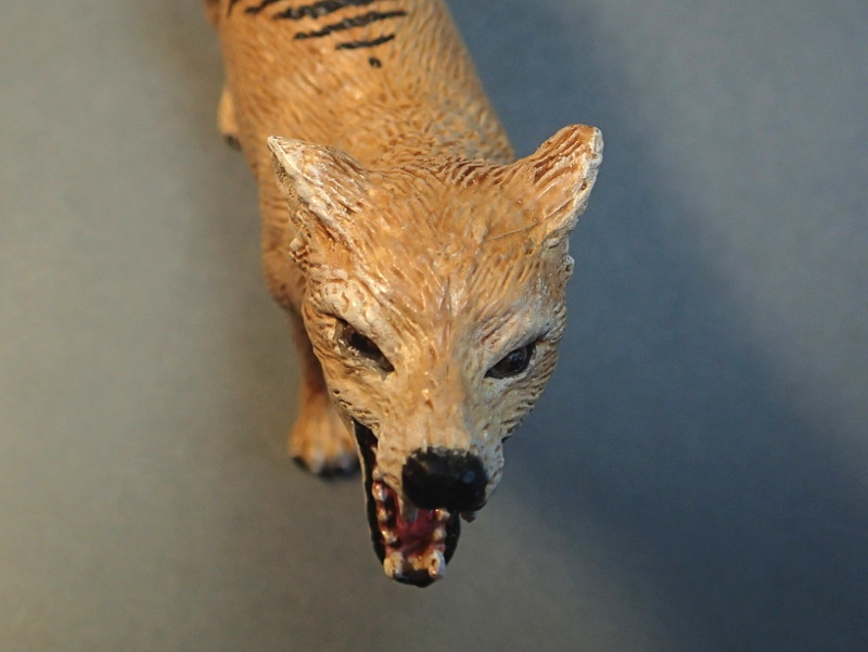 The thylacine from Southlands Replicas, - item no 00000 :-D Southland00000Headc_zpsinvsok1p