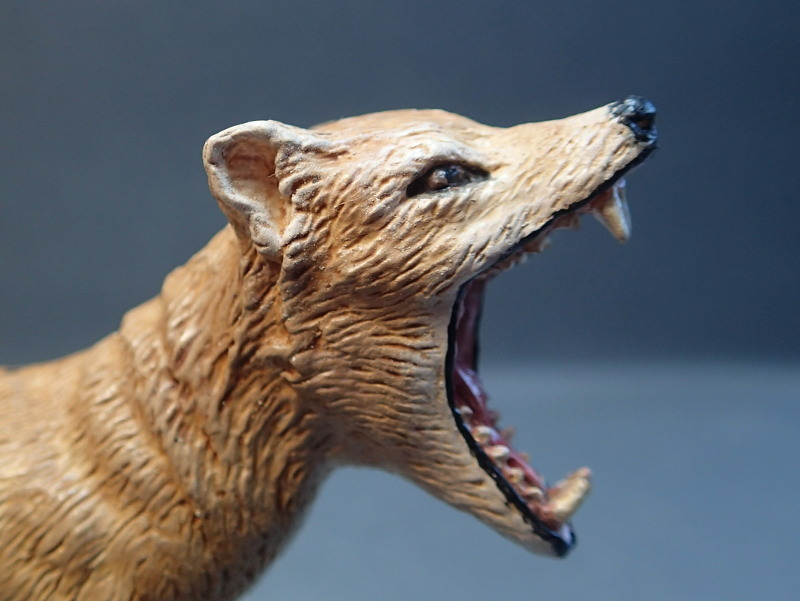 The thylacine from Southlands Replicas, - item no 00000 :-D Southland00000Teeth_zpsf429fhq7