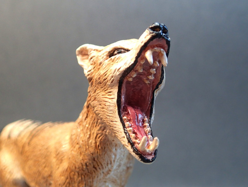 The thylacine from Southlands Replicas, - item no 00000 :-D Southland00000Teethb_zpspi1j2ear