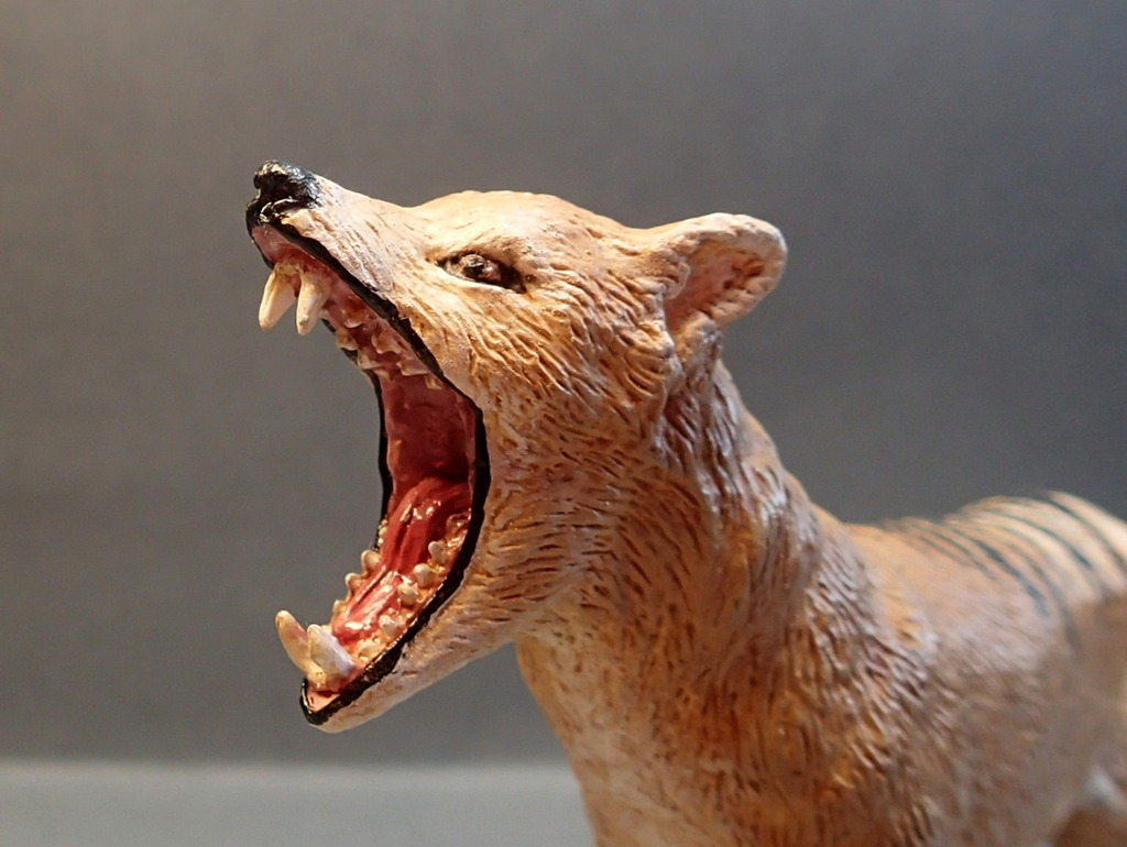 The thylacine from Southlands Replicas, - item no 00000 :-D Southland00000Teethc_zpsasjc0zbs
