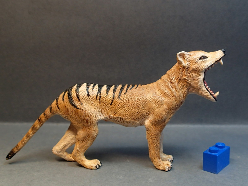The thylacine from Southlands Replicas, - item no 00000 :-D Southland00000_zpsq8qzyodh
