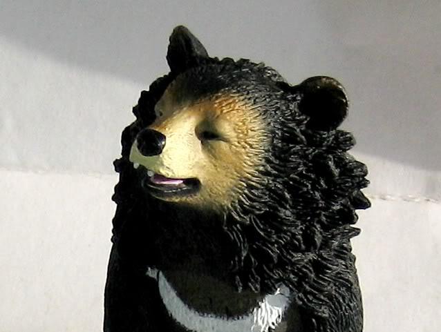 The Asian black bear :-D Abear4