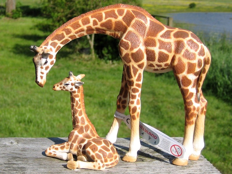 An octupus from Kristie, tiger and lioness with kittens, the new giraffes and Fridolin, the missing calf :-) Giraffeandcalf12