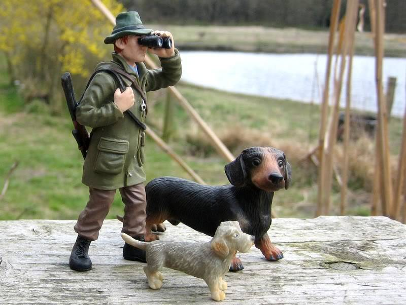 A hunter on my terrace :-o Hunter1
