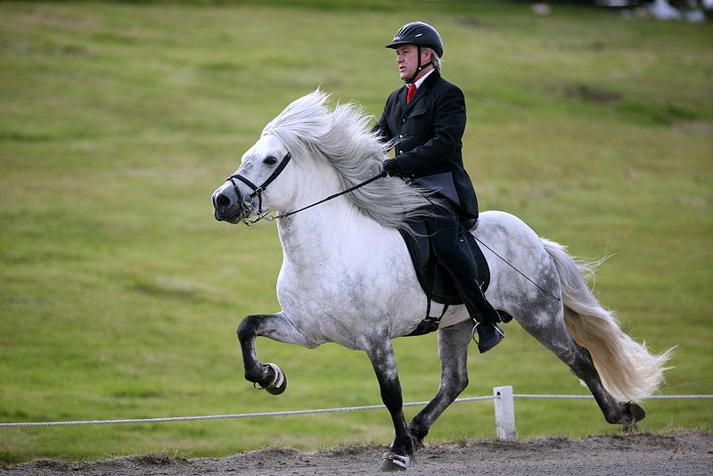 Model horse photo show Saevar