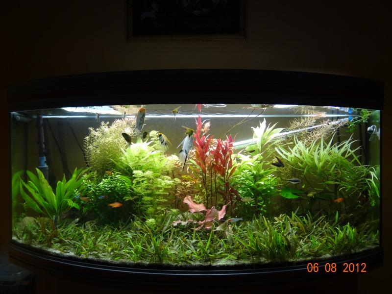 actualizacion acuario 240l DSC01083