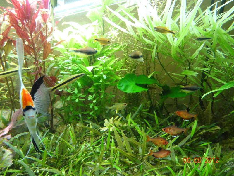 actualizacion acuario 240l DSC01085