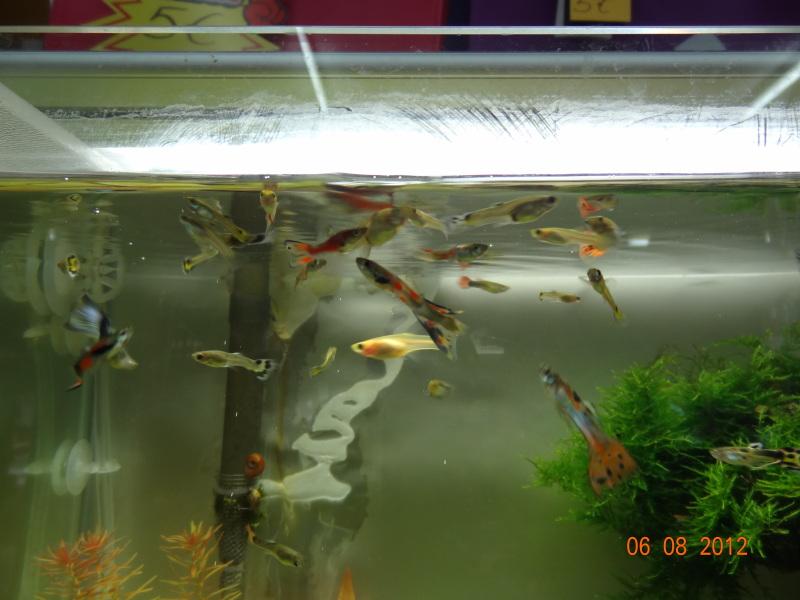 nuevo acuario 34l - Página 2 DSC01129