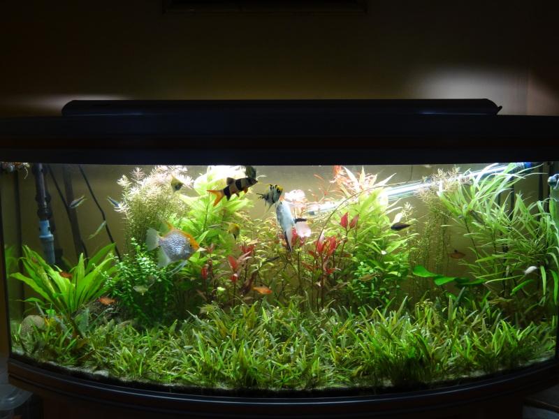 actualizacion acuario 240l DSC01260