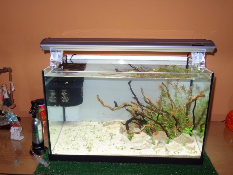 adios acuario panoramico de 76l y hola acuario rectangular de 60l DSC01363_zps1ab8182d