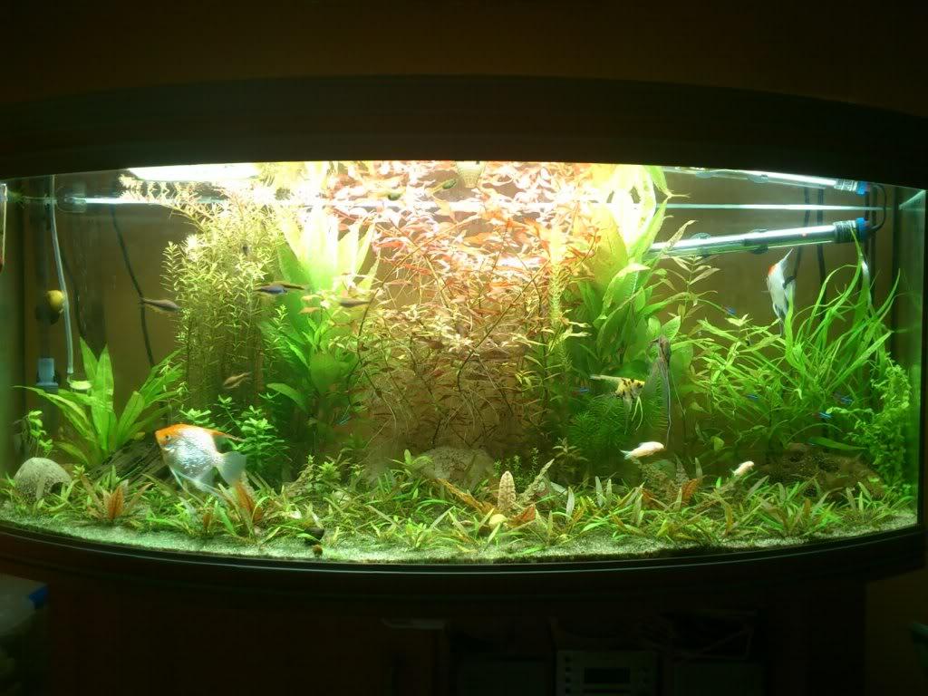 actualizacion acuario 240l DSC_0731