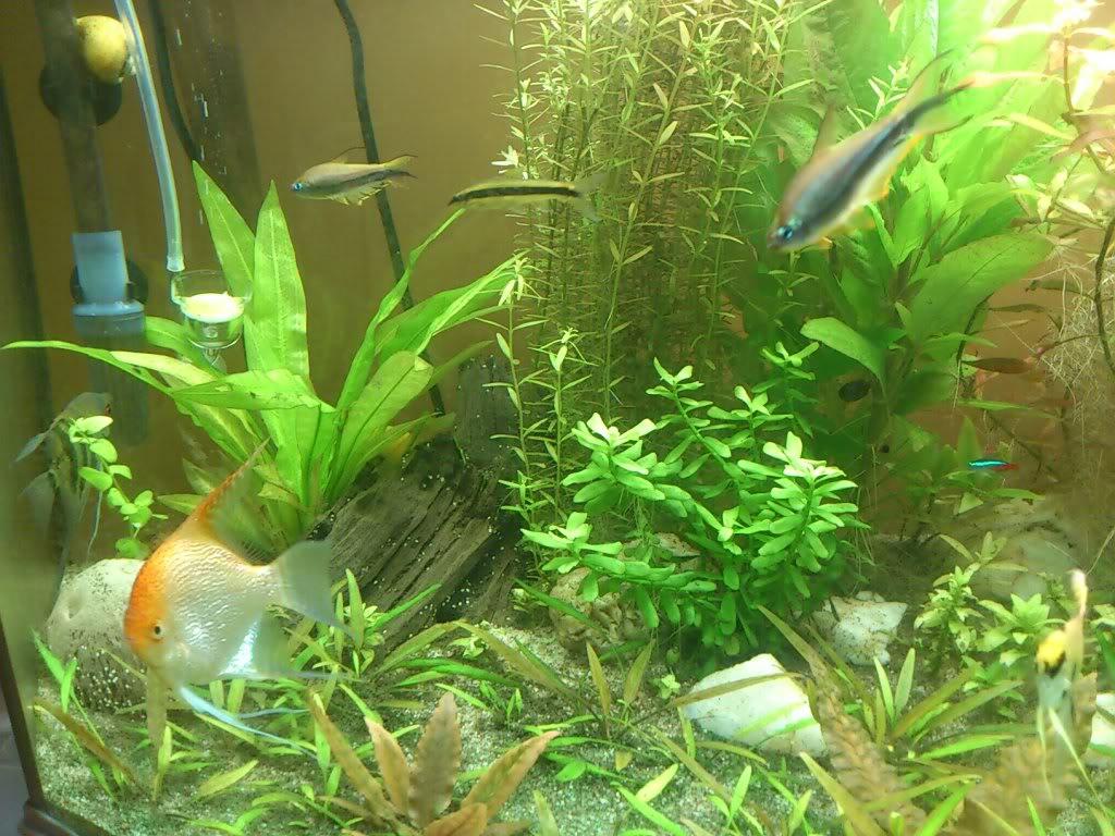 actualizacion acuario 240l DSC_0732