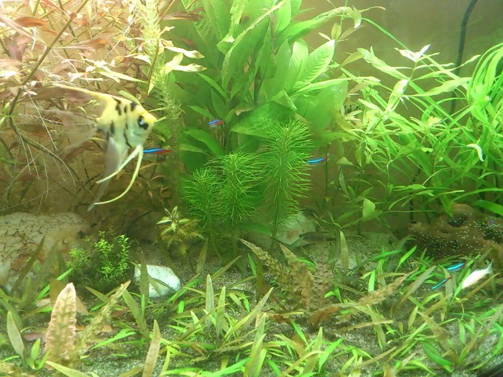actualizacion acuario 240l DSC_0733