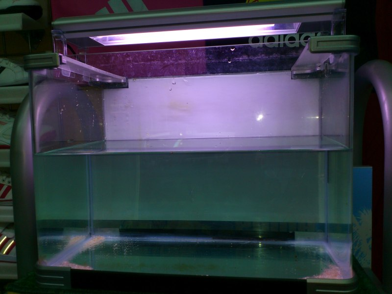 nuevo acuario 34l DSC_1154