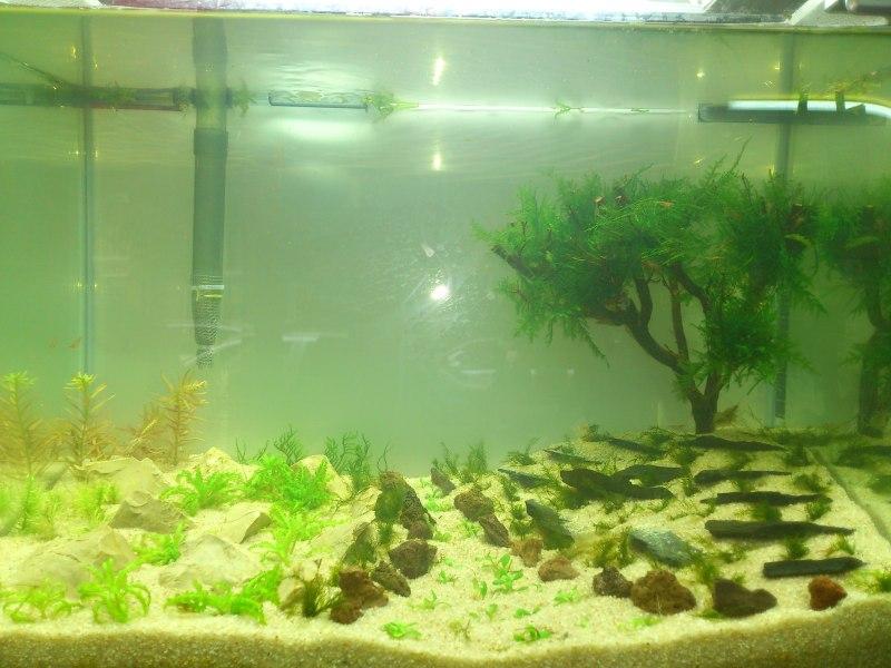 nuevo acuario 34l DSC_1180