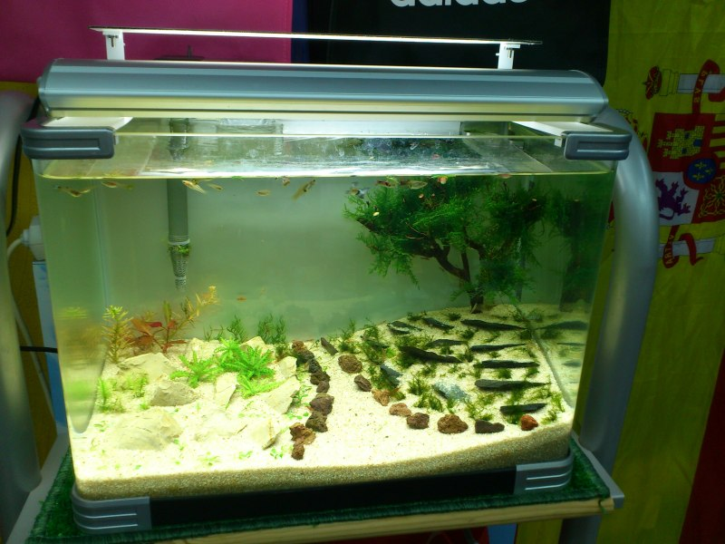 nuevo acuario 34l DSC_1204