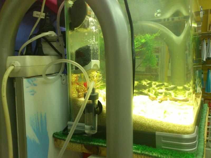 nuevo acuario 34l DSC_1207